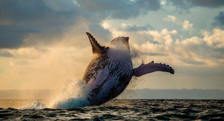 article-madagascar-baleine