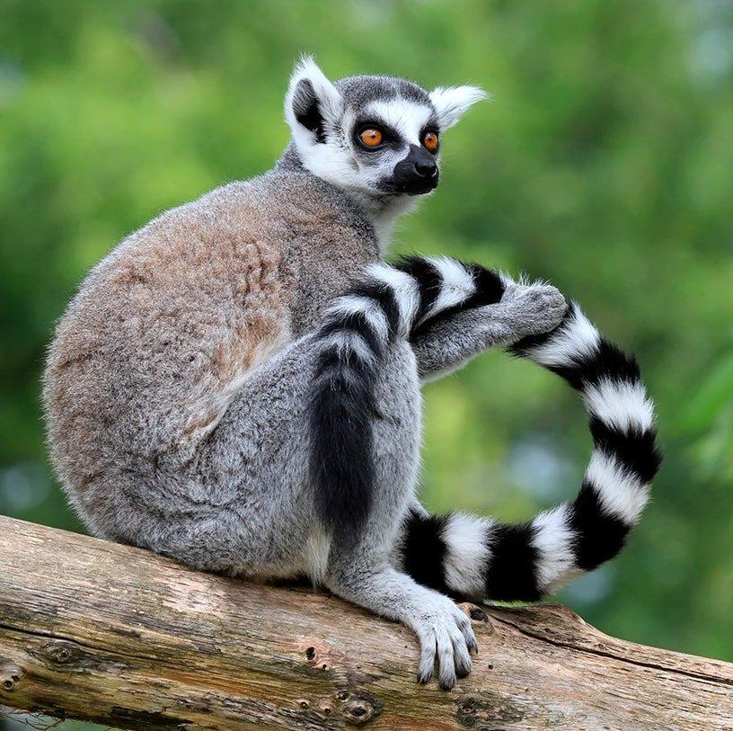 OFFRES-Comores - Madagascar