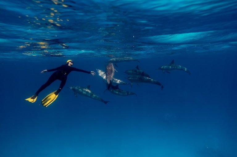 ACCEUIL-Salon de la plongée 2016 : immersion à l'Île de la Réunion !