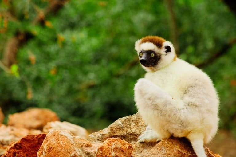 ACCUEIL-10 raisons de visiter Madagascar !