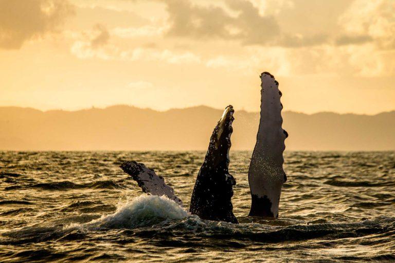 ACCUEIL-À la rencontre des baleines à Madagascar