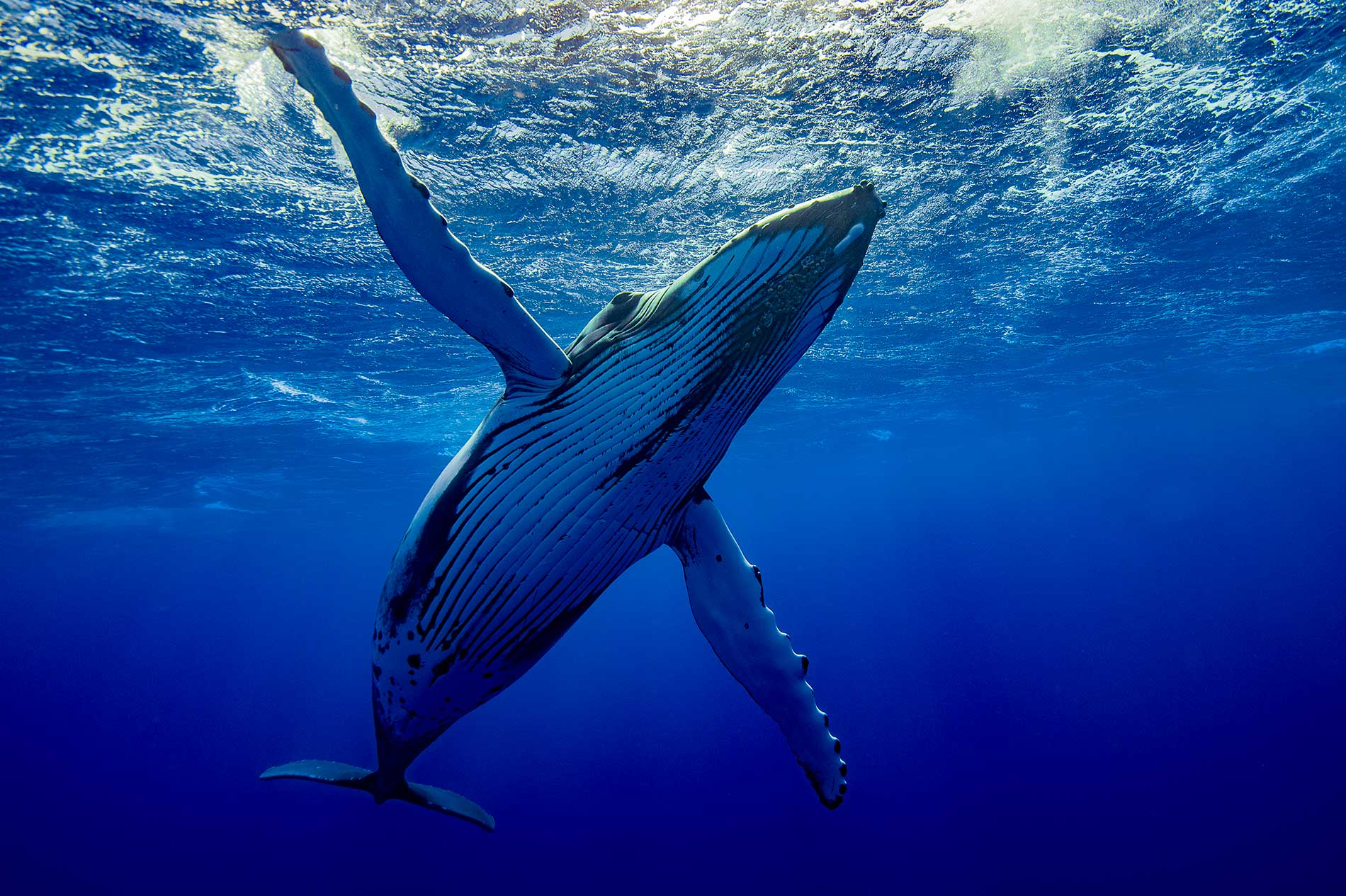 ACCUEIL-Whale-watching in Madagascar