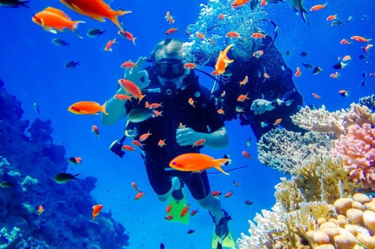 ACCUEIL-Plongée sous-marine : c'est la fête des mers