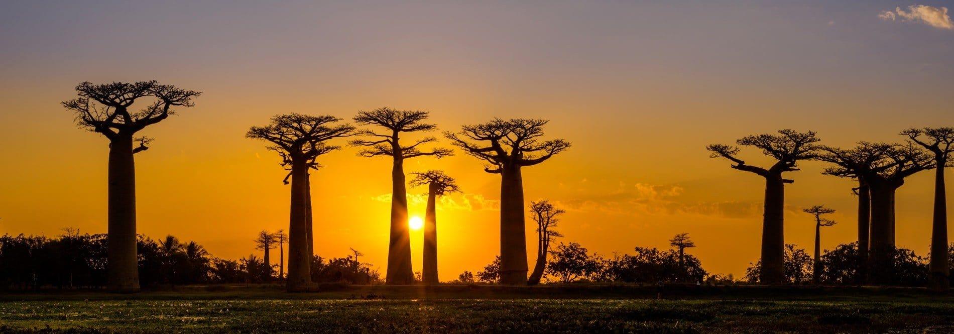 ACCUEIL-4000 arbres plantés dans la montagne des Français à Antsiranana