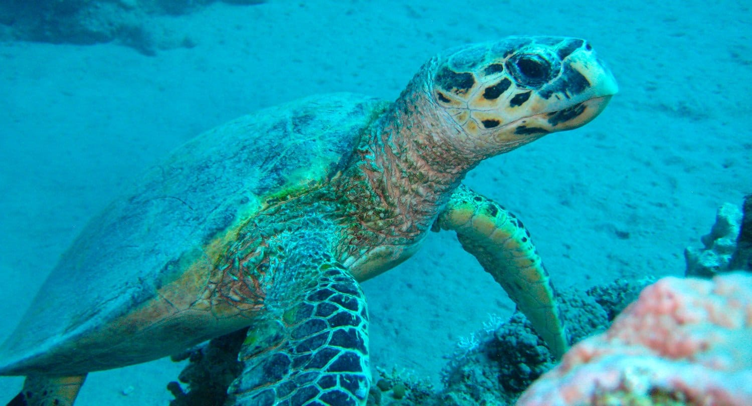 ARTICLE-Scuba diving : the celebration of the sea