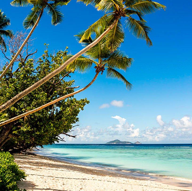 ARTICLE-Les bons résultats des Îles Vanille en 2015