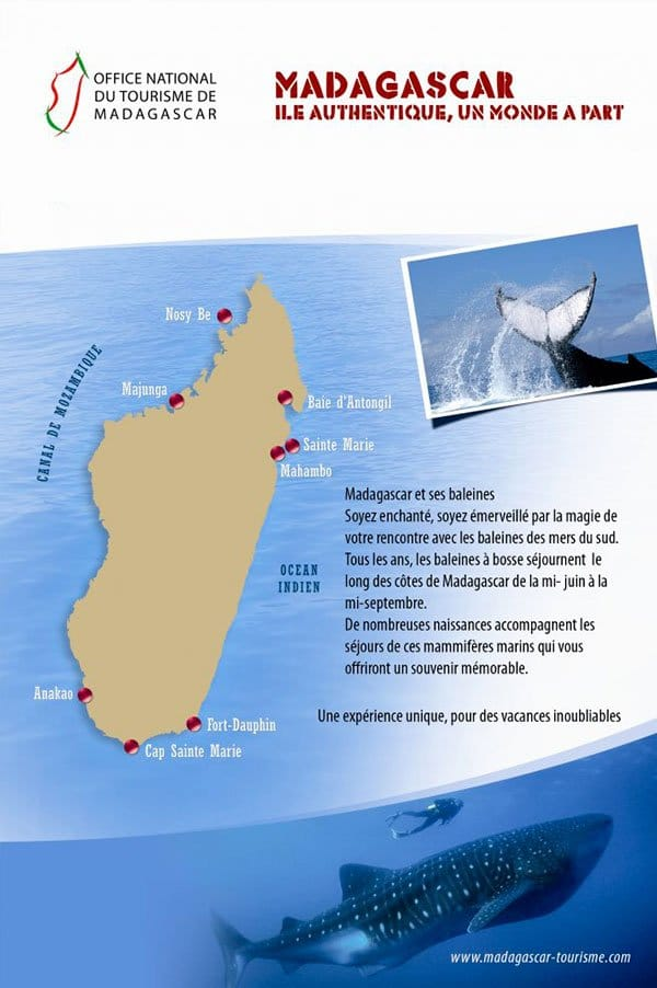 ARTICLE-Whale-watching in Madagascar