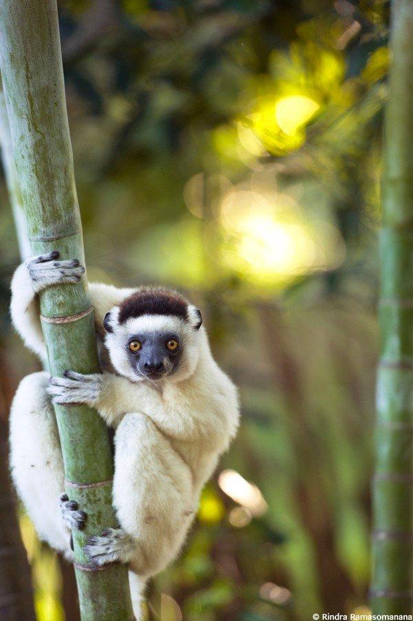 MADAGASCAR ©Office National du Tourisme de Madagascar