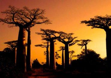 PAGE-MADAGASCAR