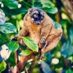 Mayotte - Singe sur arbre