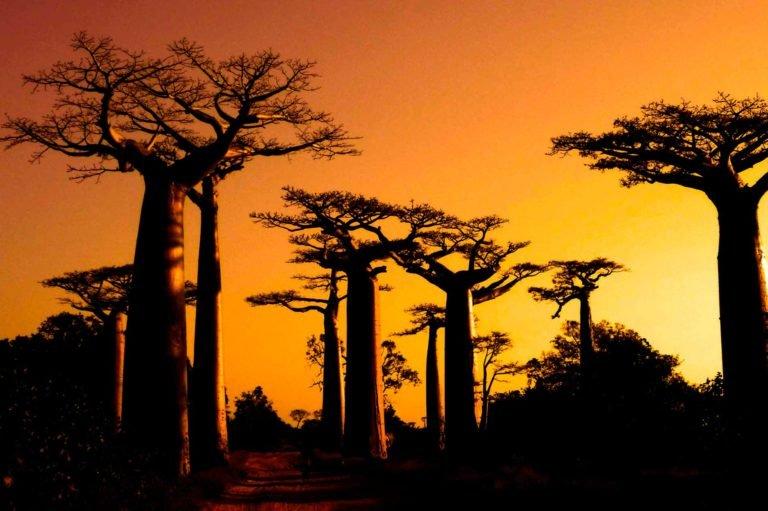 MADAGASCAR-CLIENT