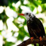 Mayotte - Oiseau local