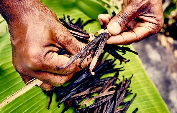 Les Comores - Gousses vanille