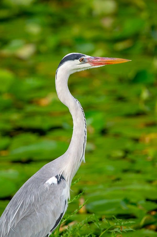 Seychelles bird