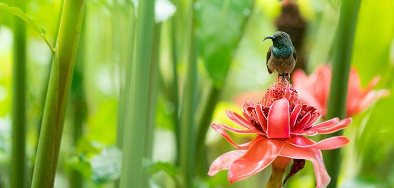 Les Seychelles - fleurs