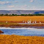 Madagascar - Paysage oiseaux