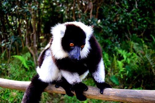 i-v-ecotourisme-andasibe-lemurien