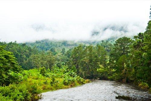 foret rivière ecotourisme