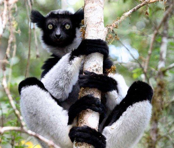 i-v-ecotourisme-lemurien-branche