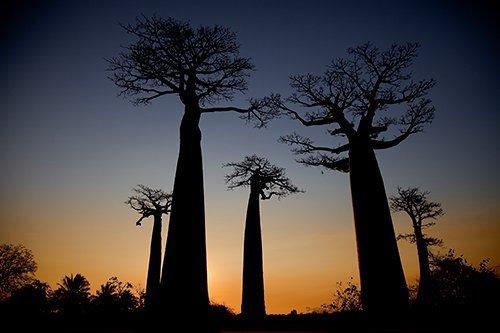 i-v-ecotourisme-madagascar-baobab