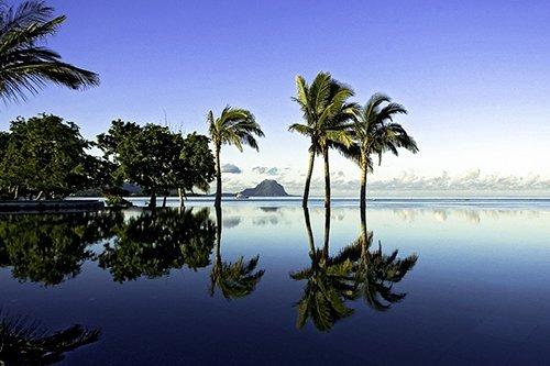i-v-ecotourisme-maurice-plage-palmier-panorama