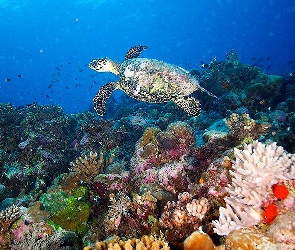 tortue de mer ecotourisme