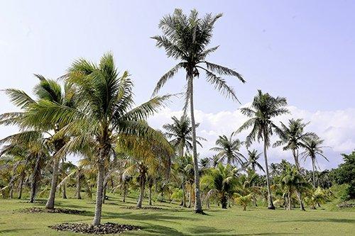 i-v-ecotourisme-palmier-foret