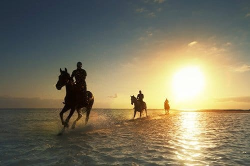 i-v-ecotourisme-promotour-beach-horse