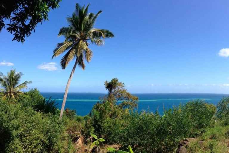 ile-vanille-home-mayotte-palmier-panorama