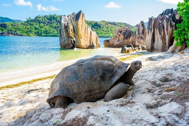 ile-vanille-home-seychelles-tortue-plage