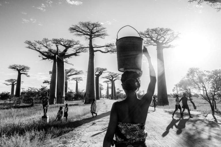 Femme devant baobabs pierrot men