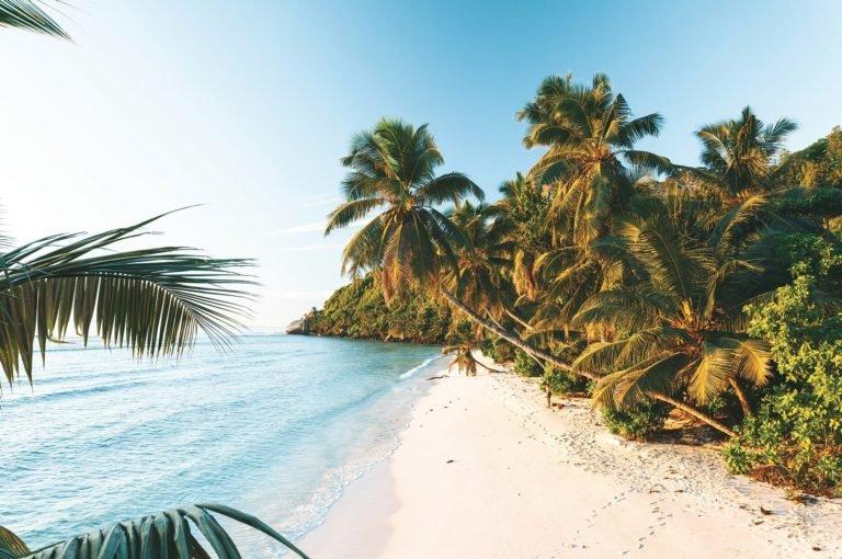 seychelles_iles-vanille_plage-palmier-mer
