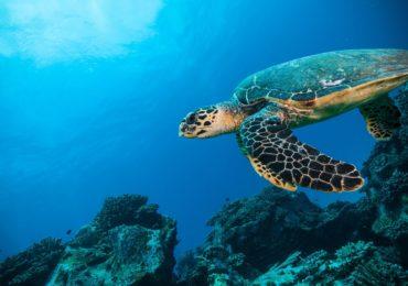 seychelles_iles-vanille-mer-fond-tortue